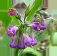 ALLANTOIN (COMFREY PLANT)